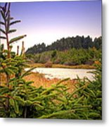 The Pond In The Forest Metal Print