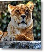 The Pondering Lioness Metal Print