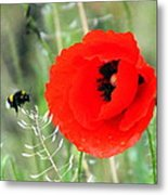 The Poppy And The Bee Metal Print