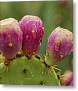 The Prickly Pear  Metal Print