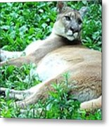 The Princess Of Queens Metal Print