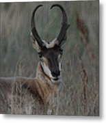 The Pronghorn 2 Dry Brushed Metal Print