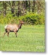 The Proud Elk Metal Print