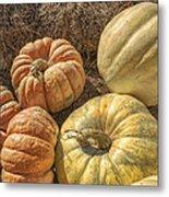 The Pumpkins Of Autumn Metal Print