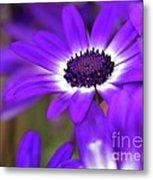 The Purple Daisy Metal Print
