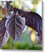 The Purple Leaf Metal Print by Aqil Jannaty