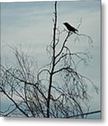 The Raven  Metal Print by Scott Ware