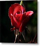 The Red Rode Bud Metal Print