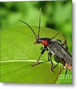 The Rednecked Bug- Close Up Metal Print