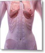 The Respiratory System Female Metal Print