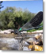 The River Dragonfly Metal Print