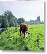 The River Suir County Tipperary Ireland In Front Of Ruins Of Mediaeval Athassel Augustinian Priory Metal Print