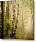 The Road Through The Woods Metal Print