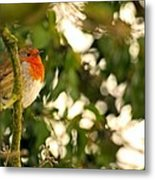 The Robin Metal Print by Dave Woodbridge