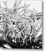 The Roots In Black And White Metal Print by Lisa Russo