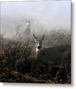 The Rut In On - White-tailed Deer Metal Print