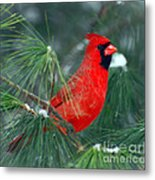 The Santa Bird Metal Print