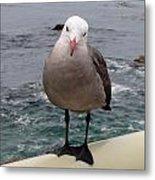 The Seagull 2 Metal Print