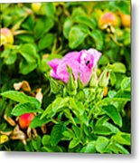 The Season Of Ripening - Featured 3 Metal Print