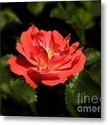 The Secret Rose Metal Print