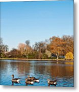 The Serpentine Ducks Metal Print