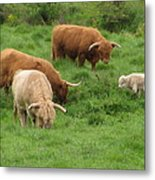 The Sheep's In The Meadow Metal Print