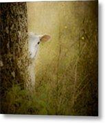 The Shy Lamb Metal Print