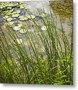 The Side Of The Lily Pond Metal Print