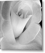 The Silver Rose In Portrait Metal Print