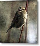 The Singing Sparrow Metal Print