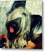 The Skye  Terrier Tilt   Metal Print