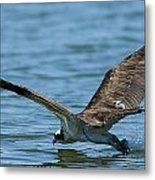 The Slide  Metal Print by Glenn Lawrence