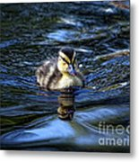 The Smallest Swimmer Metal Print