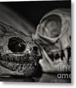 The Snapper And The Cat Metal Print