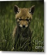 The Softer Side Of Nature Metal Print
