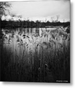 The Softness Of Nature Metal Print