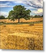 The Solitary Farm Tree Metal Print