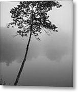 The Solitary Tree Metal Print