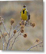 The Song Of The Lark Metal Print