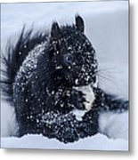 The Sought After Prize Metal Print