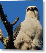 New Orleans  Southern Osprey Metal Print