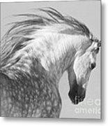 The Spanish Stallion Tosses His Head Metal Print