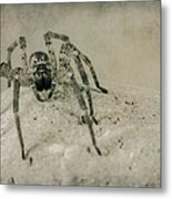 The Spider Series Xi Metal Print