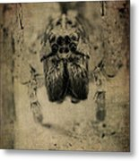 The Spider Series Xiii Metal Print