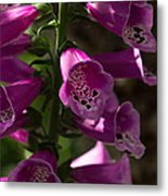 The Splendor Of Foxgloves Metal Print