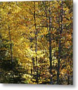 The Splendor Of Yellow   Metal Print