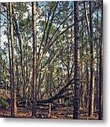 The Split Oak. Metal Print