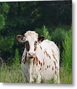 The Spotted Cow Metal Print