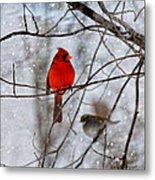 Blue Eyes In The Snow Cardinal  Metal Print