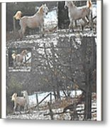The Stallion Lives In The Country Metal Print by Patricia Keller